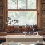 garlic, cactus, window